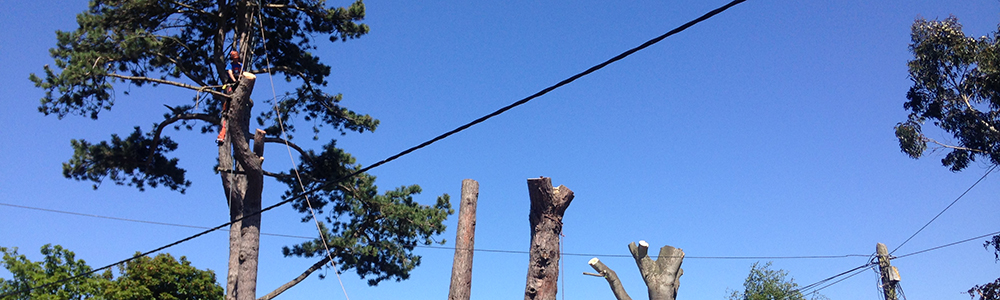 Tree Pruning & Shaping - Foxcover Tree Services